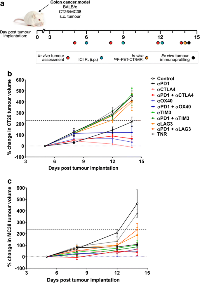 Granzyme B Pet Imaging Of Immune Checkpoint Inhibitor Combinations In Colon Cancer Phenotypes Springerlink