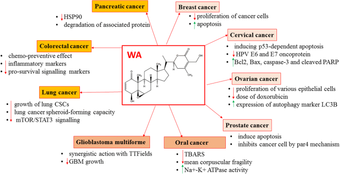 Overview Of The Anticancer Activity Of Withaferin A An Active Constituent Of The Indian Ginseng Withania Somnifera Springerlink