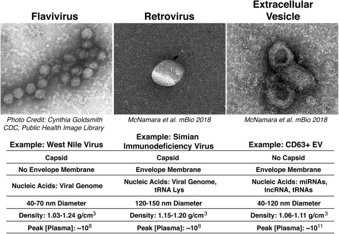 Cele mai periculoase 12 virusuri din lume