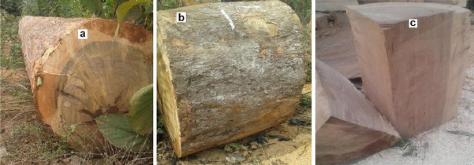 Physical and mechanical properties of Klainedoxa gabonensis with ...