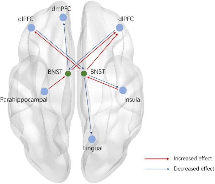 Resting-state causal connectivity of the bed nucleus of the stria ...