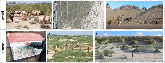 Is 're-mobilisation' nature restoration or nature destruction? A ...