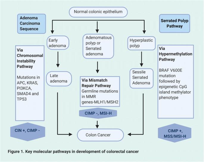 Molecular Pathogenesis And Classification Of Colorectal Carcinoma Springerlink