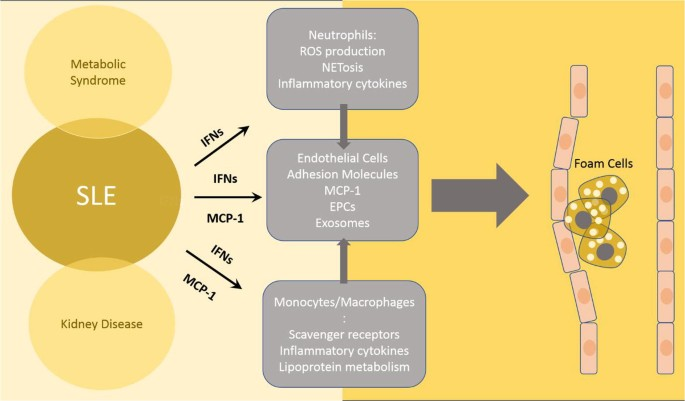 Innate Immune Dysregulation in the Development of Cardiovascular ...