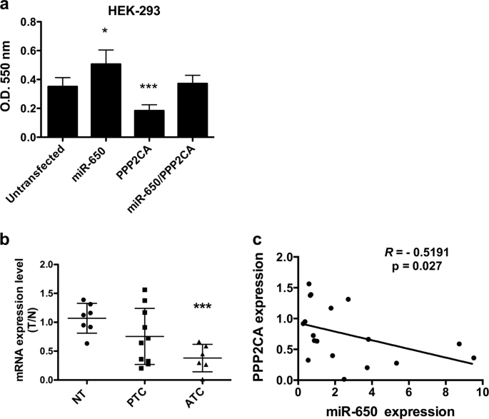 miR-650 promotes motility of anaplastic thyroid cancer cells by ...