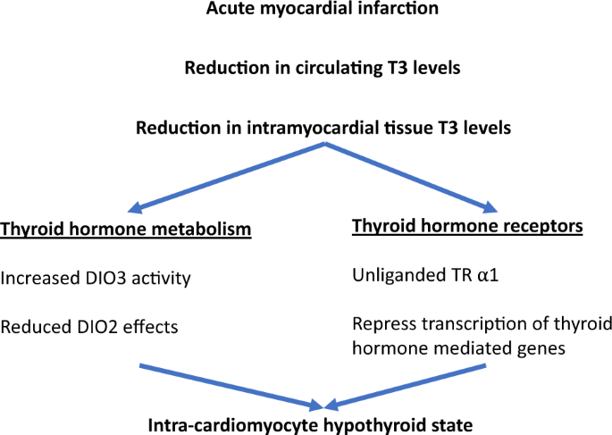 Novel Uses Of Thyroid Hormones In Cardiovascular Conditions