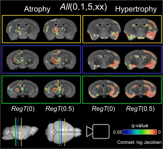 Small Animal Multivariate Brain Analysis (SAMBA) – a High ...