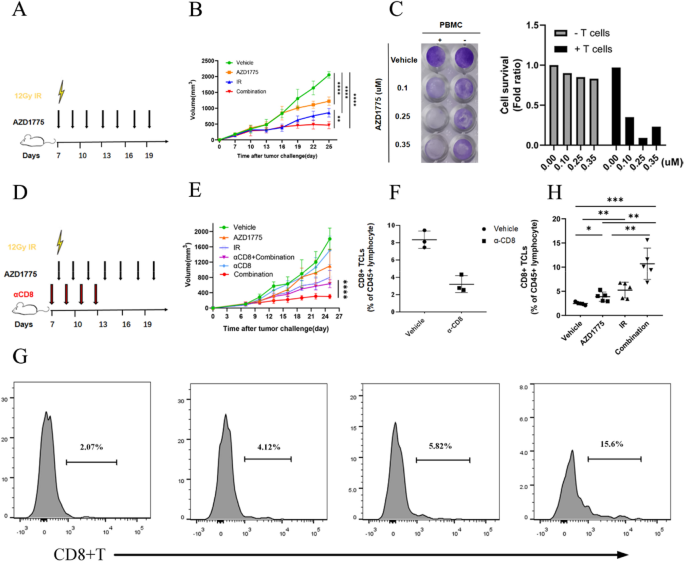 Wee1 Kinase Inhibitor Azd1775 Potentiates Cd8 T Cell Dependent Antitumour Activity Via Dendritic Cell Activation Following A Single High Dose Of Irradiation Springerlink