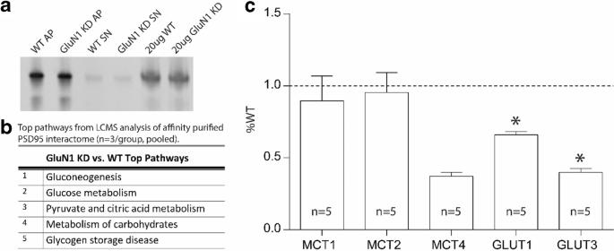 Connectivity Analyses of Bioenergetic Changes in Schizophrenia ...