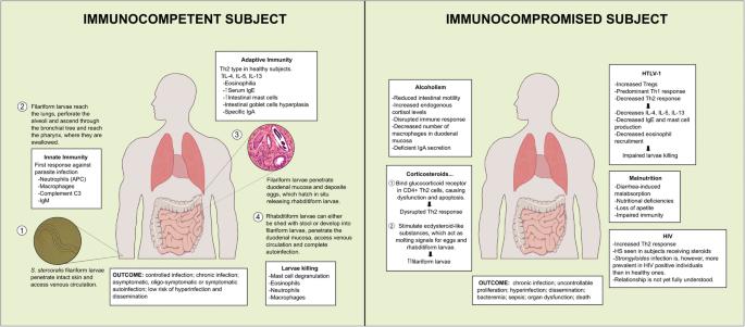 A strongyloidosis fertőző vagy sem