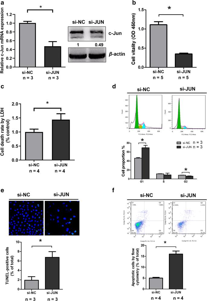 c-Jun promotes the survival of H9c2 cells under hypoxia via PTEN ...