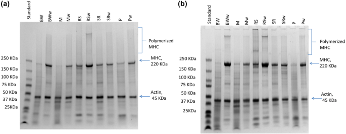Valorization of recurrently discarded fish species in trawler ...