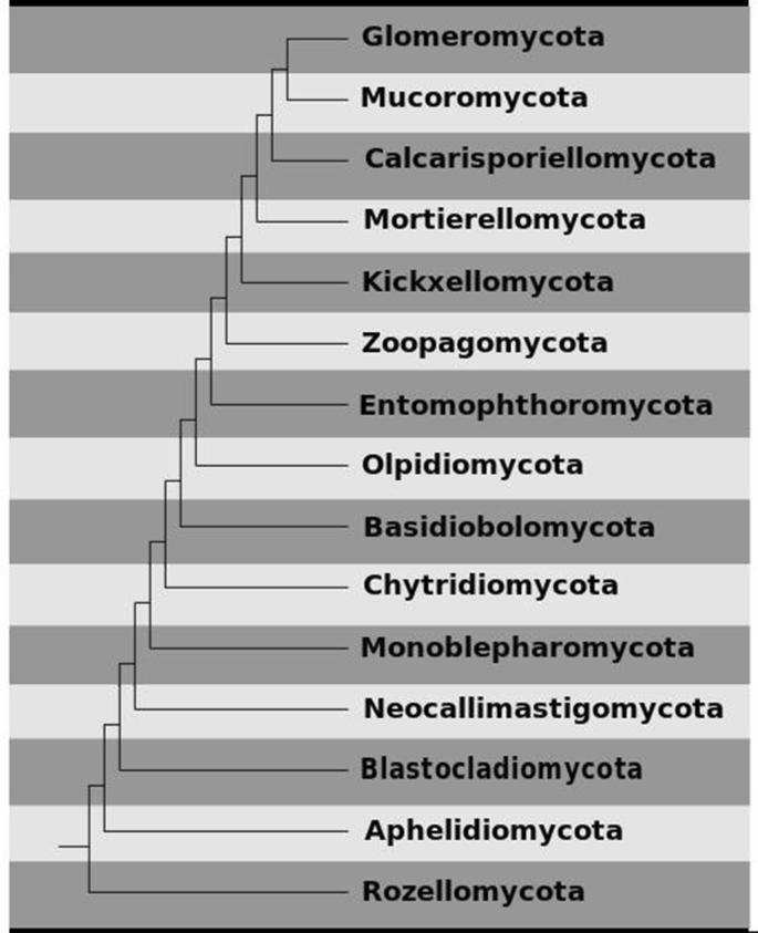 Notes for genera: basal clades of Fungi (including Aphelidiomycota ...