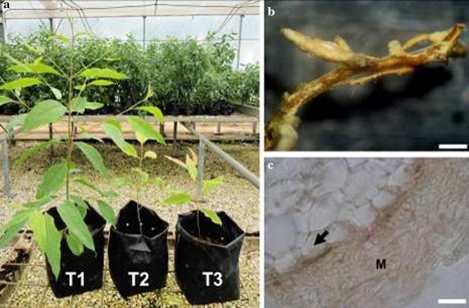 The amazing potential of fungi: 50 ways we can exploit fungi ...