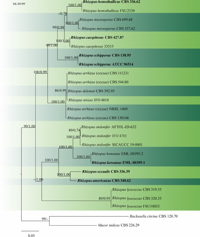 One stop shop IV: taxonomic update with molecular phylogeny for ...