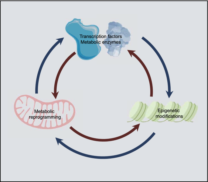 Metabolic reprogramming and epigenetic modifications on the path ...
