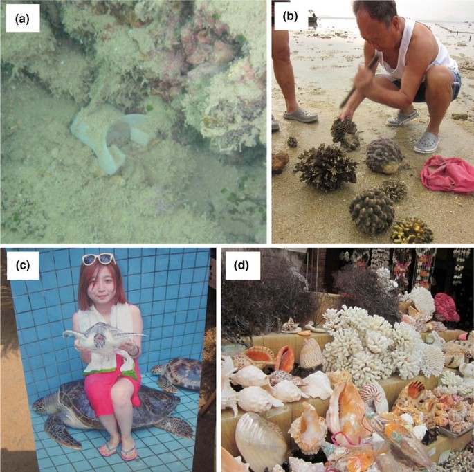 Can private management compensate the ineffective marine reserves ...
