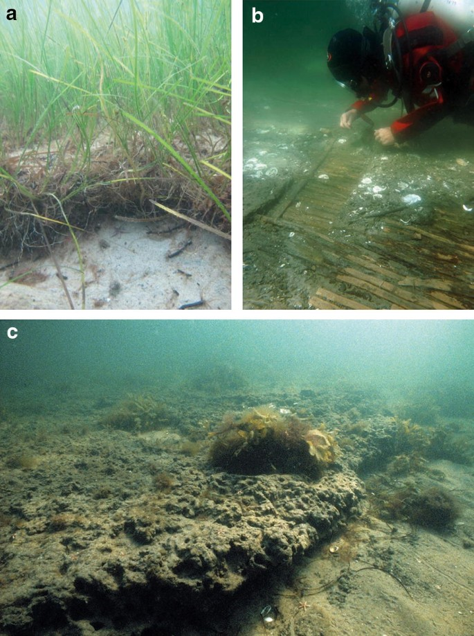 Seagrass sedimentary deposits as security vaults and time capsules ...