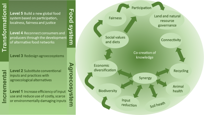 Agroecological principles and elements and their implications for ...