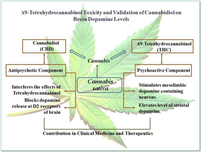 THC CBD cannabinoid receptor