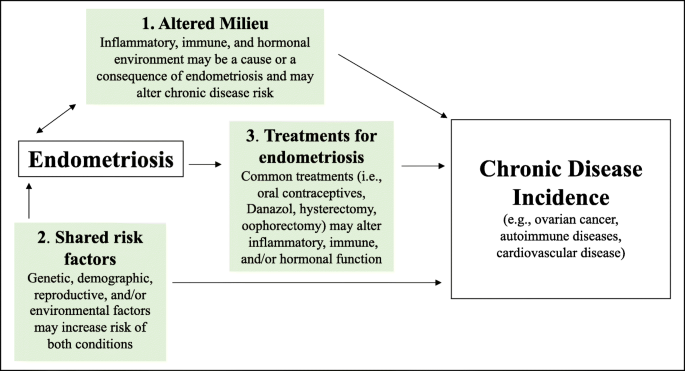 Long Term Health Consequences Of Endometriosis Pathways And Mediation By Treatment Springerlink