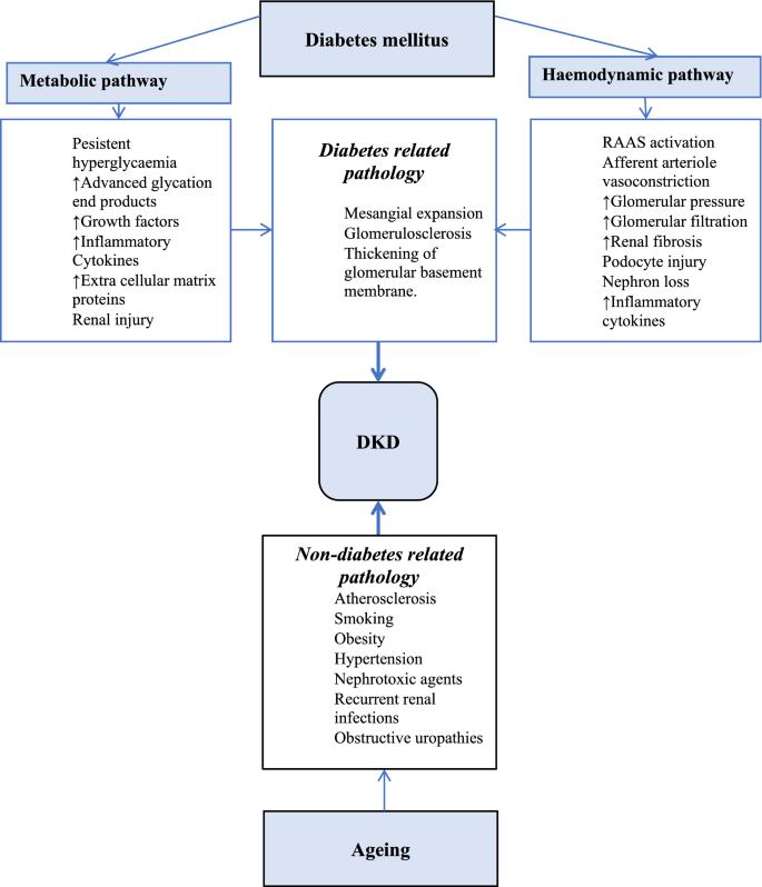 Diabetic Kidney Disease In Older People With Type 2 Diabetes Mellitus Improving Prevention And Treatment Options Springerlink