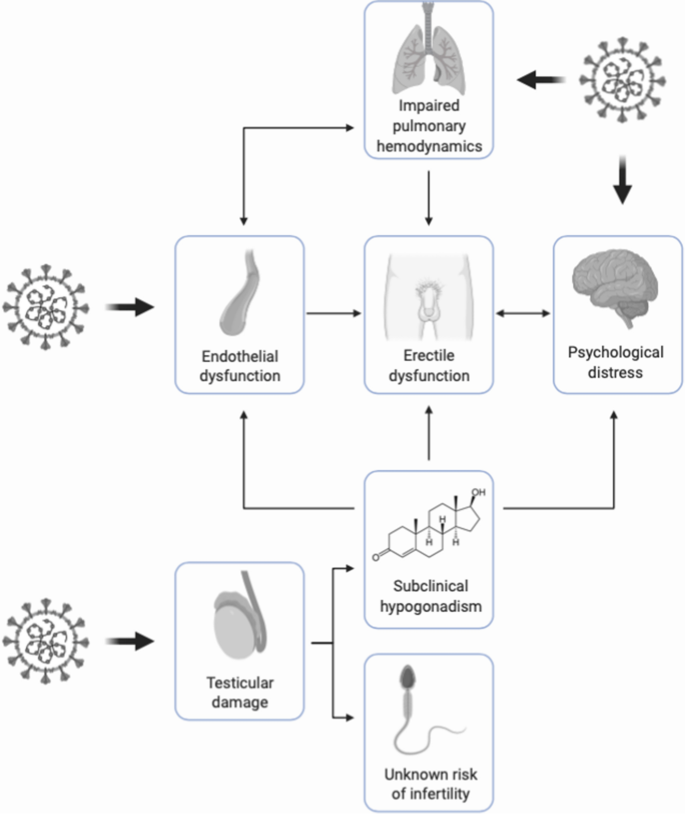Addressing Male Sexual And Reproductive Health In The Wake Of Covid 19 Outbreak Springerlink