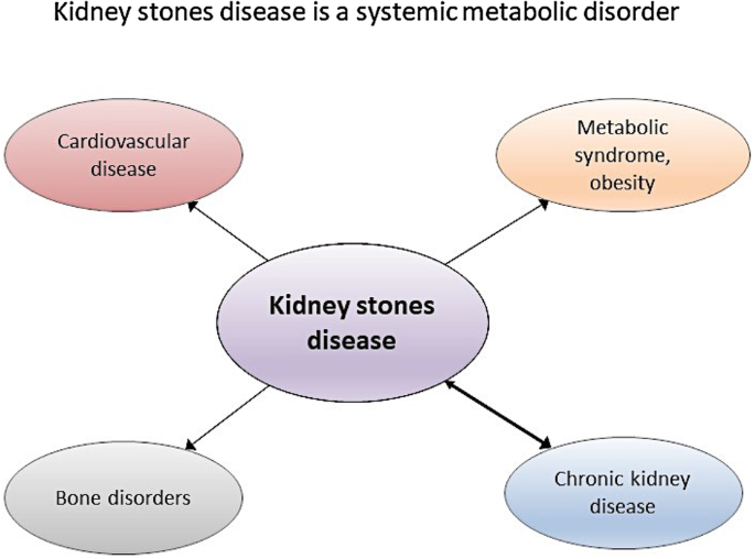 Meeting Report Of The Symposium On Kidney Stones And Mineral Metabolism Calcium Kidney Stones In 2017 Springerlink