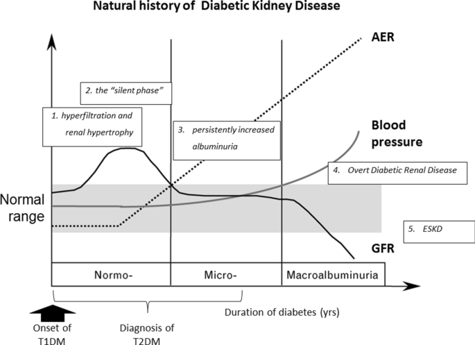 Blood Pressure Reduction And Raas Inhibition In Diabetic Kidney Disease Therapeutic Potentials And Limitations Springerlink