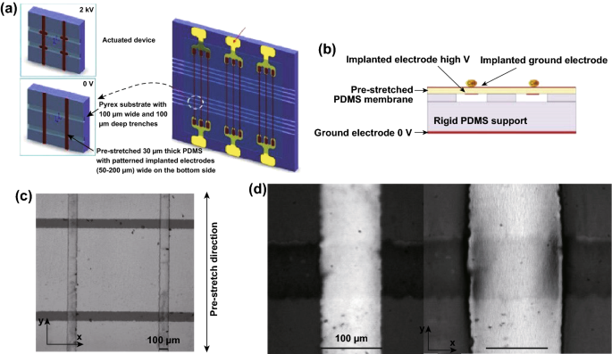 Cell Nanomechanics Based on Dielectric Elastomer Actuator Device ...