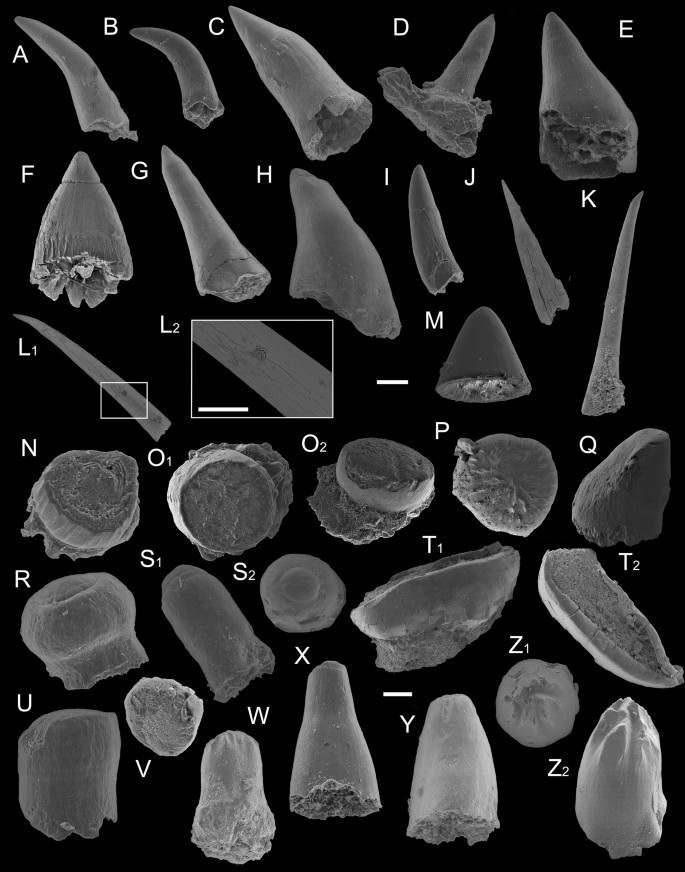 A late Permian ichthyofauna from the Zechstein Basin, Lithuanian ...