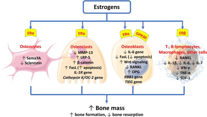 19++ Lowest dose of estrogen for osteoporosis ideas in 2021