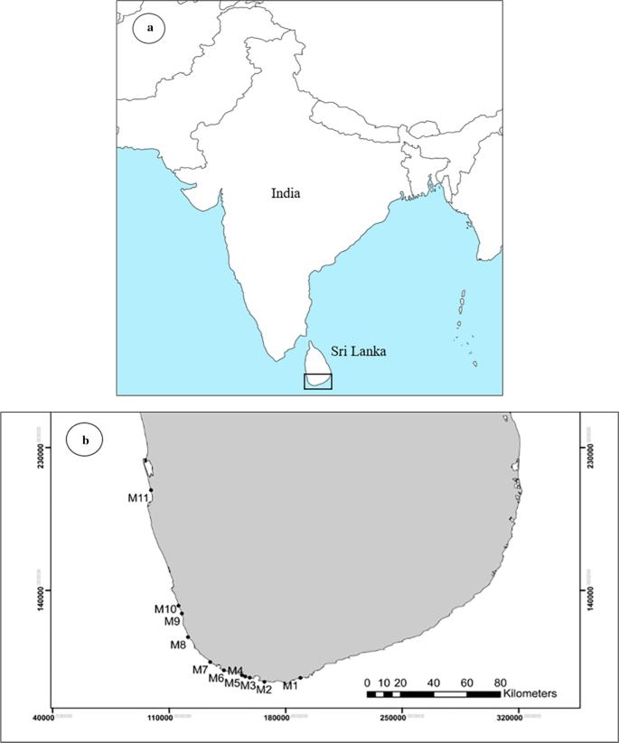 Distribution and cementation characteristics of beachrocks along ...