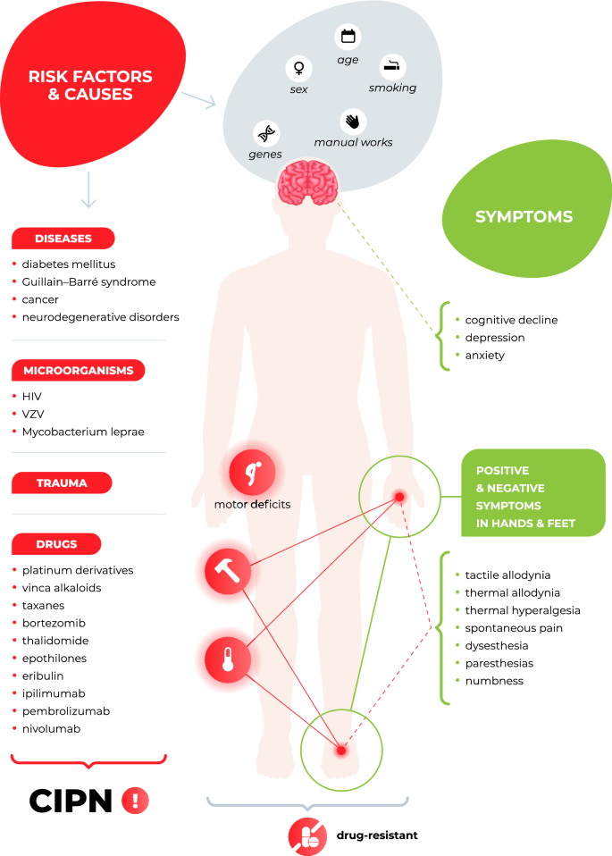 Chemotherapy-induced peripheral neuropathy: part 1—current state ...