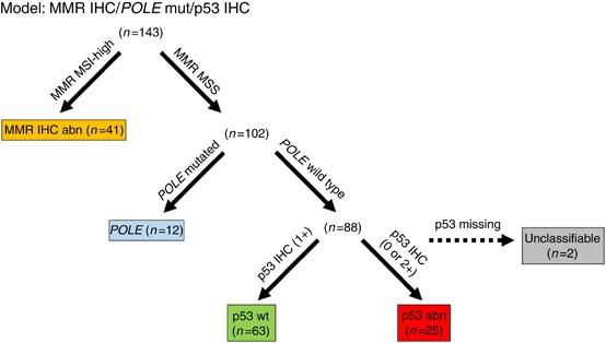 endometrial cancer p53)