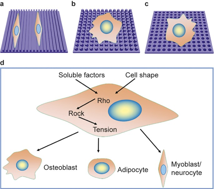 Nanomaterials And Bone Regeneration Bone Research