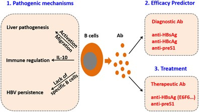 humoral immunity hepatitis immunology hbv cellular underestimated molecular player nature