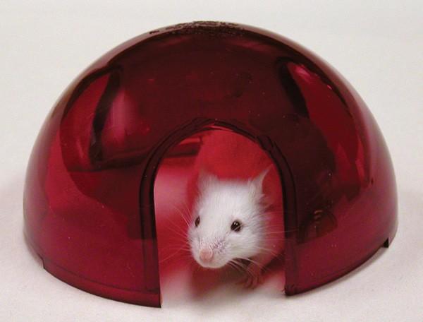 handbook of rodents in captivity