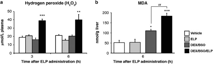 Establishment of a mouse model of enalapril-induced liver injury and  investigation of the pathogenesis | Laboratory Investigation