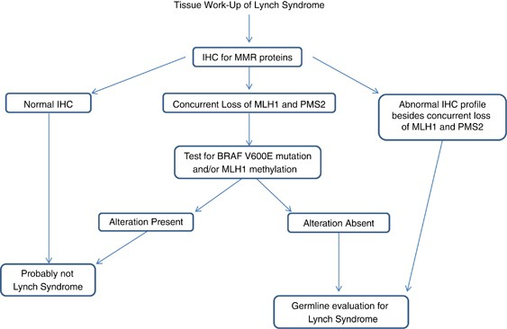 Evaluation Of Colorectal Cancers For Lynch Syndrome Practical Molecular Diagnostics For Surgical Pathologists Modern Pathology