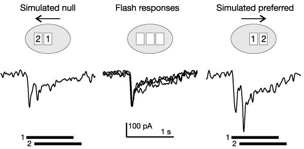 mechanisms and circuitry underlying directional selectivity in the retina