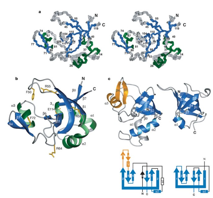 Structure And Nucleic-acid Binding Of The Drosophila