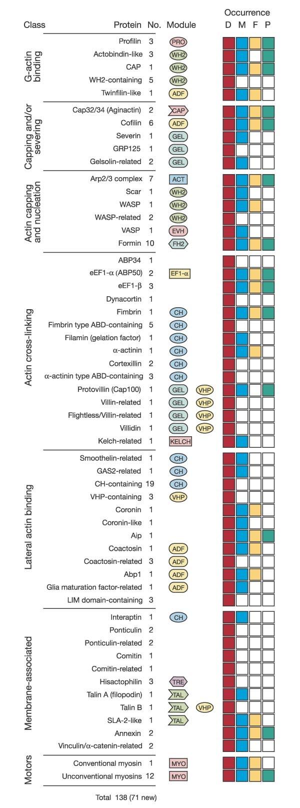 The genome of the social amoeba Dictyostelium discoideum