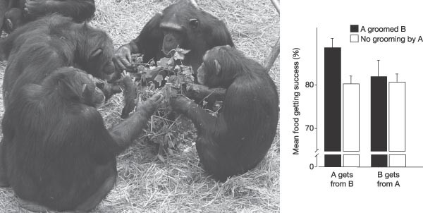 A Century Of Getting To Know The Chimpanzee Nature