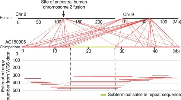 A genome-wide comparison of recent chimpanzee and human