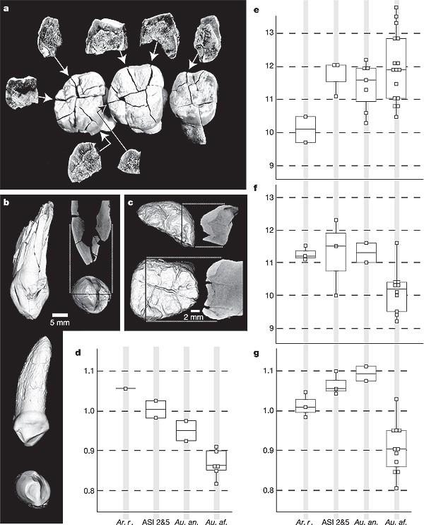 Asa Issie, Aramis and the origin of Australopithecus   Nature