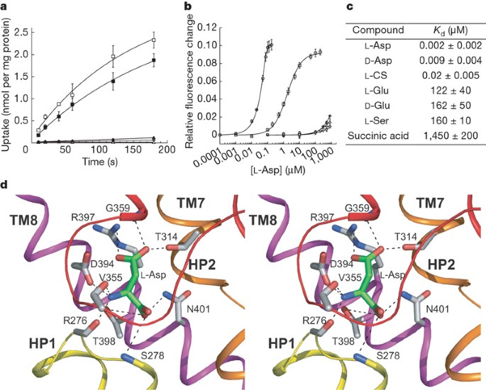 Coupling substrate and ion binding to extracellular gate of a  sodium-dependent aspartate transporter | Nature