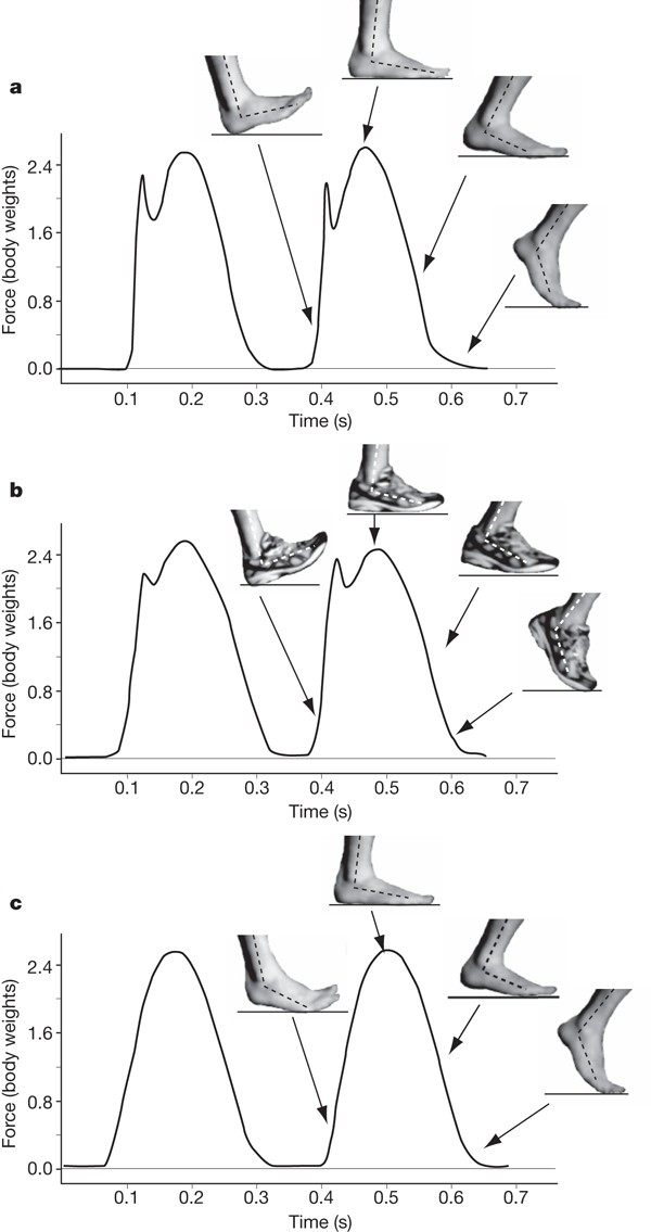 a,RFS during barefoot heel–toe running; b,RFS,   during shod heel–toe running; c,FFS during barefoot,   toe–heel–toe running. Both RFS gaits generate an impact,   transient, but shoes slow the transient's rate of   loading, and lower its magnitude. FFS generates no   impact transient, even in the barefoot condition.