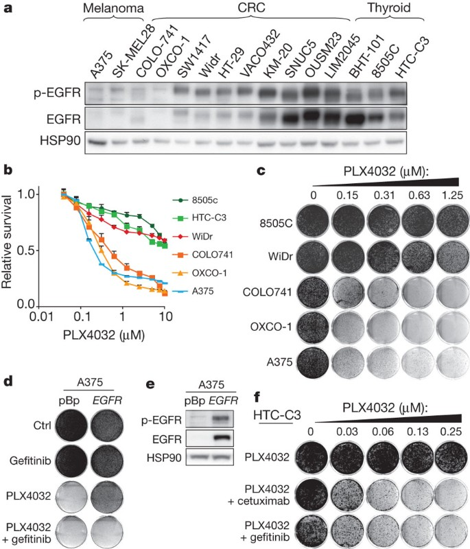 Unresponsiveness Of Colon Cancer To Braf V600e Inhibition Through Feedback Activation Of Egfr Nature