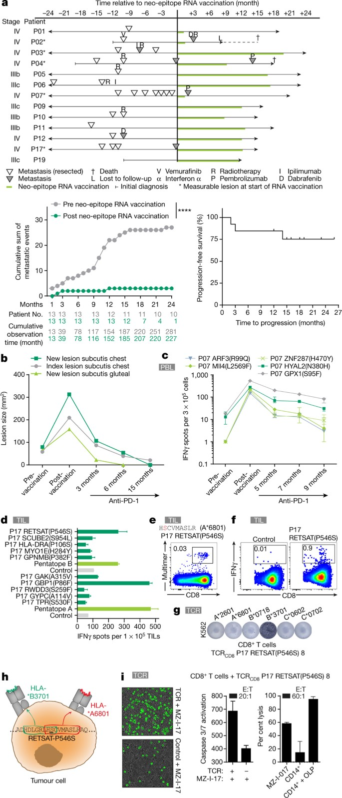 Personalized Rna Mutanome Vaccines Mobilize Poly Specific Therapeutic Immunity Against Cancer Nature